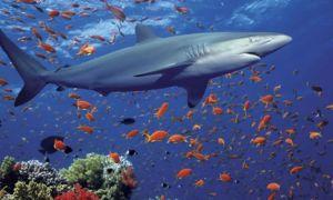 Интересная информация о хрящевых рыбах — химерах, акулах, скатах