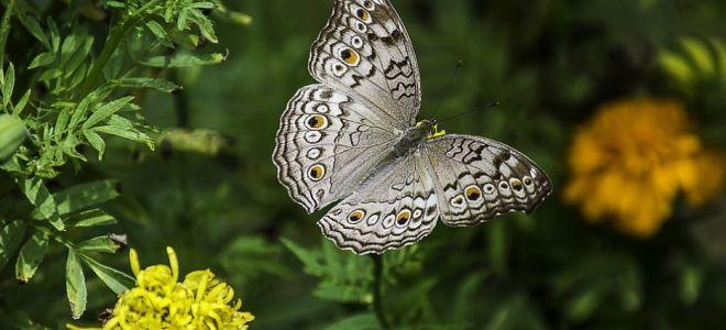Дыхательная система у насекомых — интересные факты
