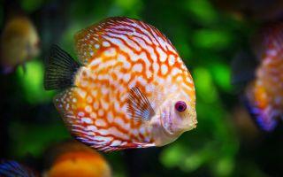 Рыбы — интересные факты
