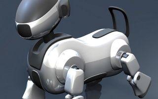 Роботы — интересные факты