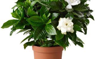 Комнатные растения — интересные факты