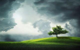 Деревья — интересные факты