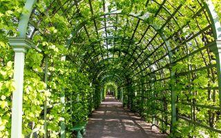 Летний Сад — интересные факты