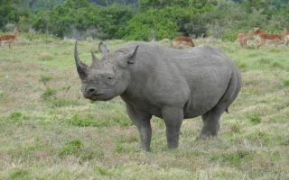 Южно-Африканская Республика — интересные факты
