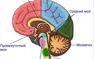 Нервная система человека — интересные факты