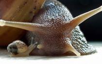 Моллюски — самое интересное
