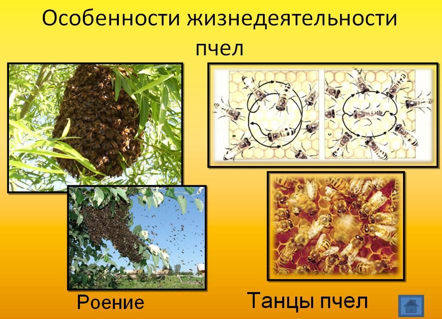 Деятельность пчел