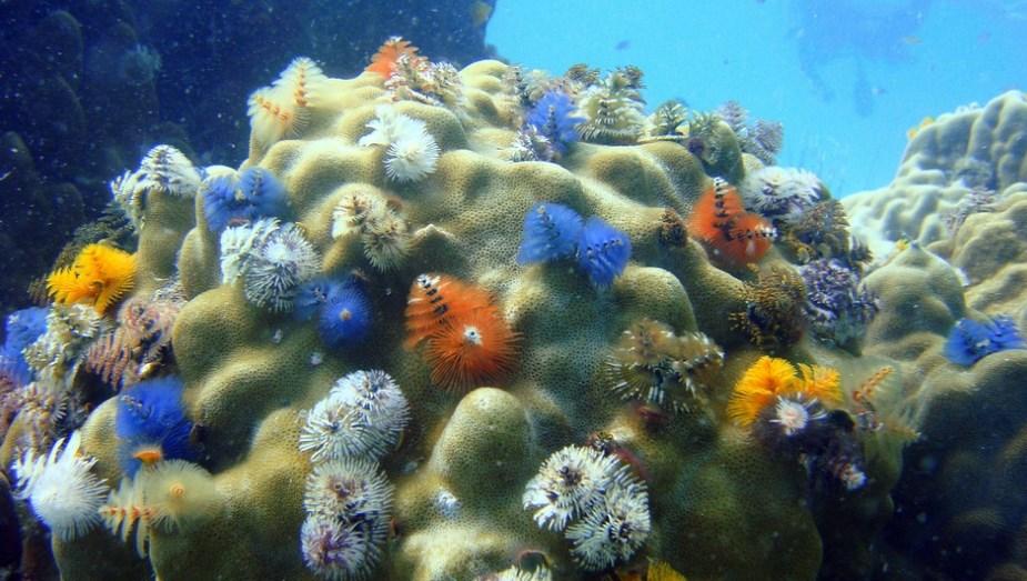 Подводные