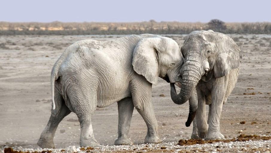 В Намибии